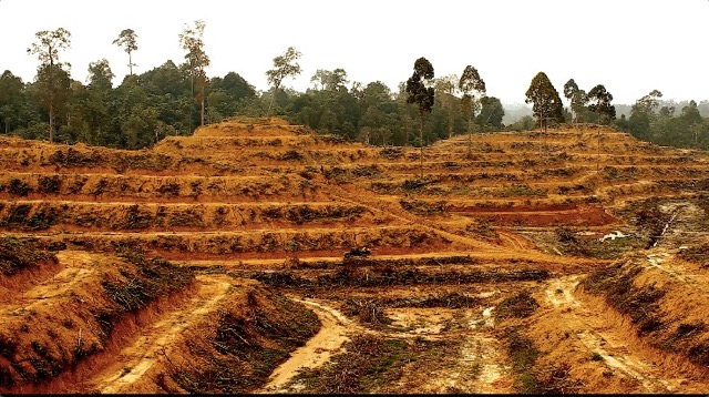 Palm Oil Factoids of 2019, and its next battle /img/illegal-palm-oil-deforestation.jpg